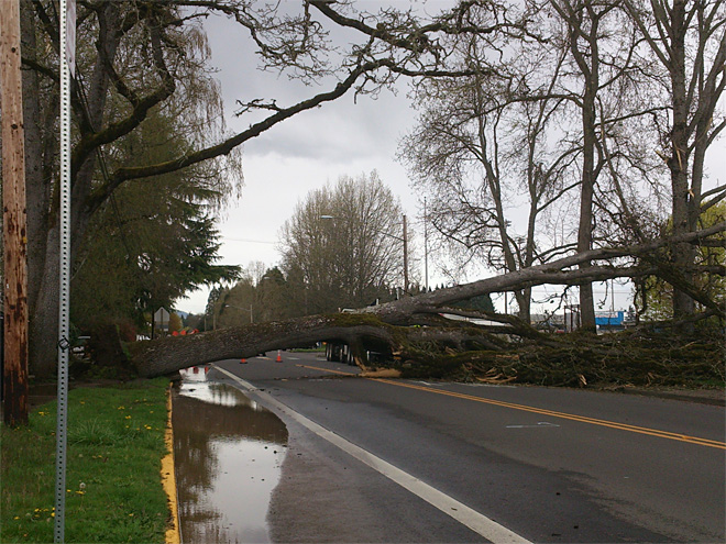 Tree falls across road near high school, damages water main