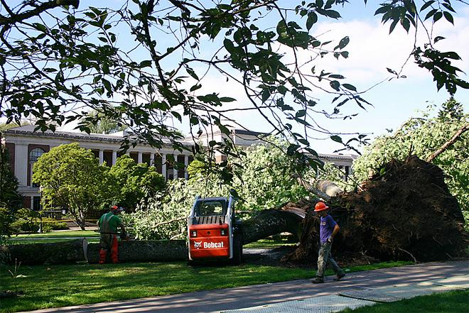 Tree falls on Oregon State quad August 1 (1)