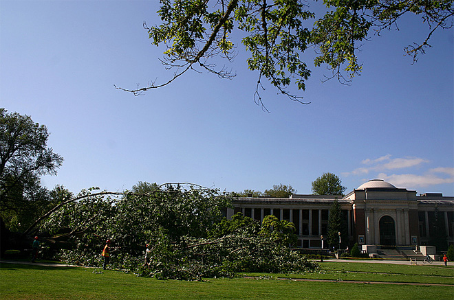 Tree falls on Oregon State quad August 1 (6)