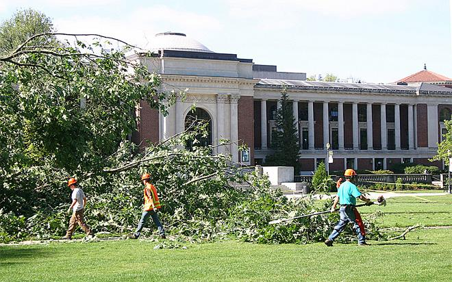 Tree falls on Oregon State quad August 1