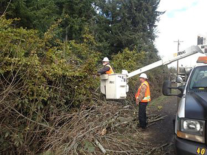 1,470 lose power near Cottage Grove when tree falls on power lines
