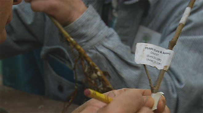 Tree grafting at the 4th annual Spring Fair 01