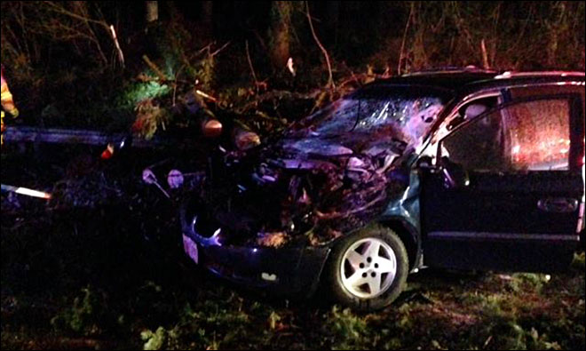 Downed trees cause crashes on Hwy 22