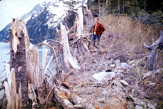 Trees broken by surge wave