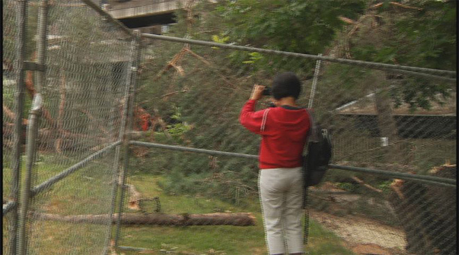 Trees removed to make way for EMU project
