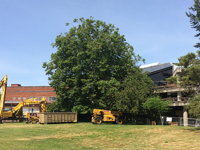 Century-old tree in way of EMU expansion on UO campus