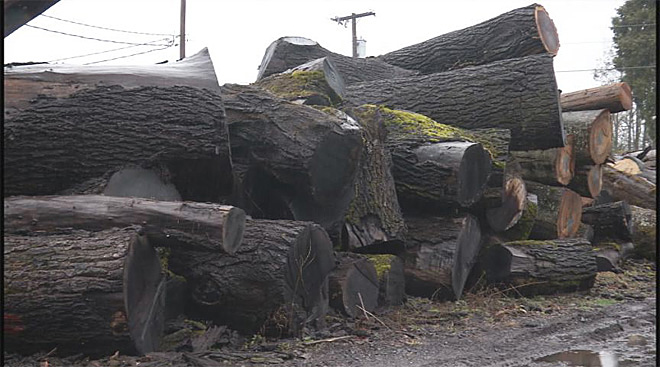 Urban Lumber Company salvages trees that fell during ice storm 05