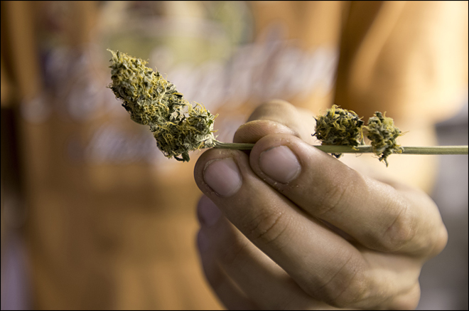 Uruguay's marijuana growers come out into open