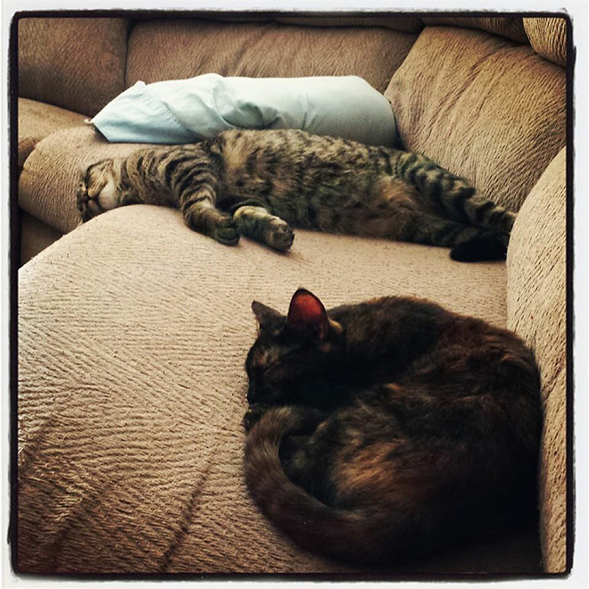 Viewer photos - National Love Your Pet Day (8)