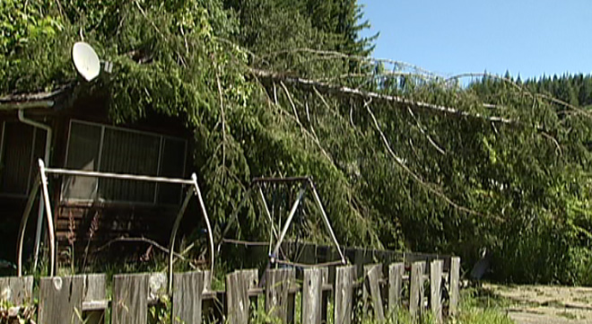 Wind blows tree down onto Coquille home