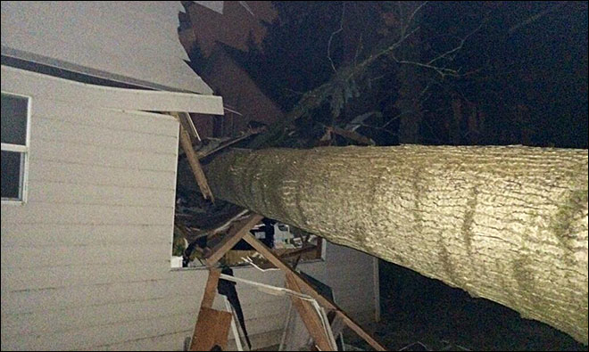 Woman frees herself after tree crashes into Wilsonville home