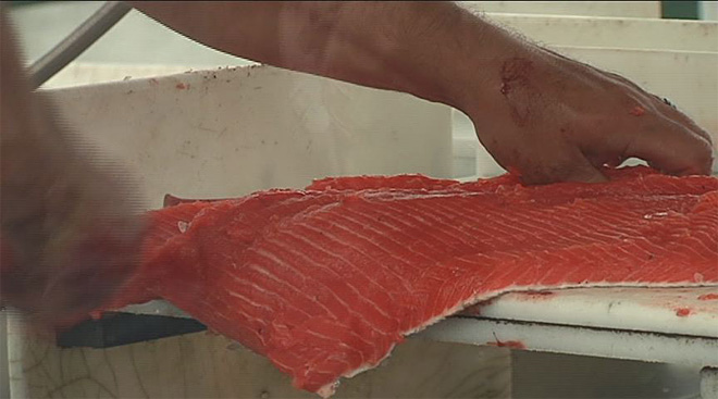 South coastline has state's highest salmon catch rates