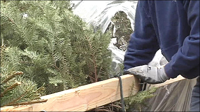 Fire officials warn: Keep Christmas trees watered or it's time to toss