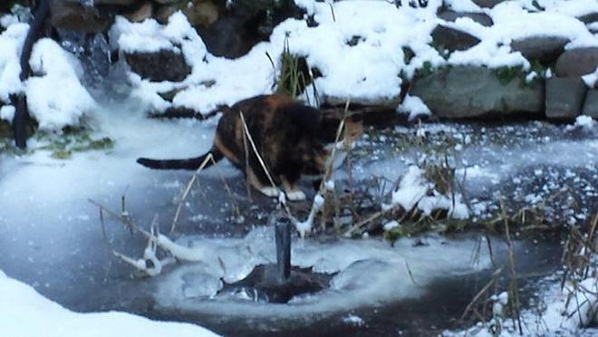 YouNews reporter kittylovindeb photo of cat on pond in Sutherlin