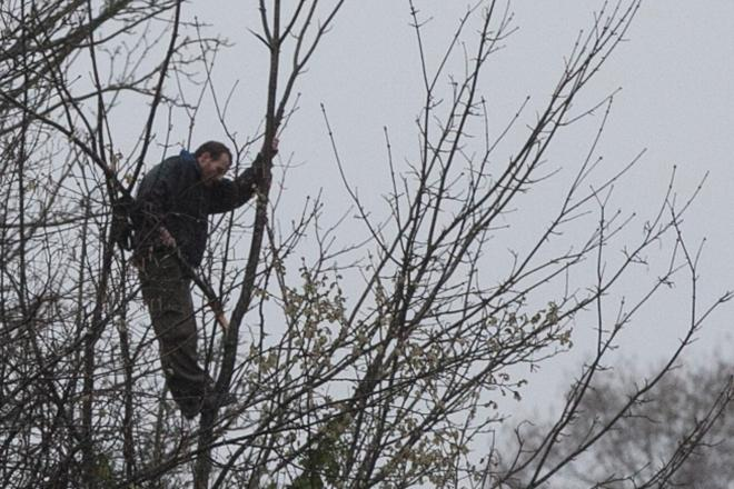 Police coax man out of tree after 3 hours, multiple train delays
