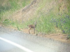 baby runin in road and stuck on hillside