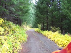 Following the Yellow leaf Road