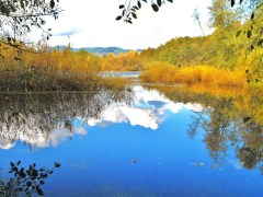 FALL COLOR-MC KENZIE RIVER IN THURSTON
