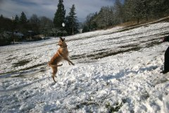 Dog Has Fun In South Eugene Snow!