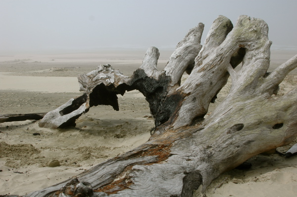 akikooda_driftwood