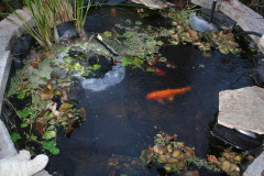 Frozen Koi Pond