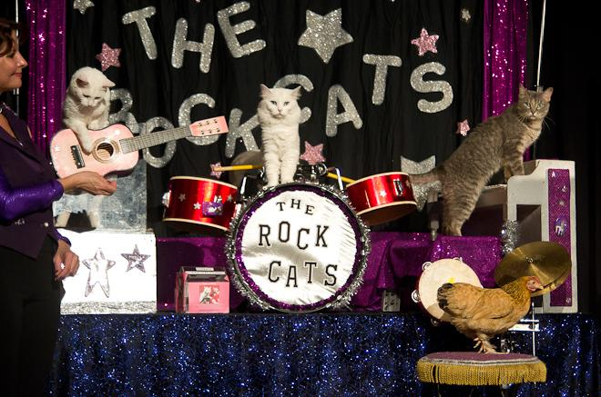 The Acro Cats!