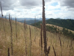 hike up blacktail ridge