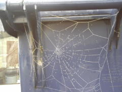 Poor Spider! Your Web Is Frozen!