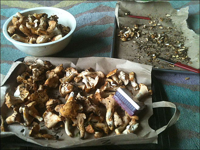 Mushroom season off to a slow start thanks to dry summer