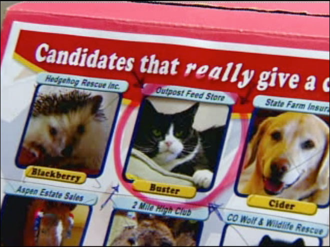 11 animals running for town mayor