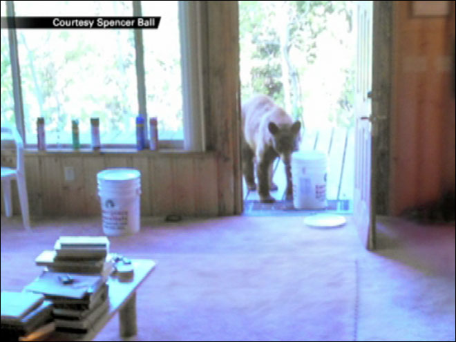 Bear lets itself into man's cabin in Utah