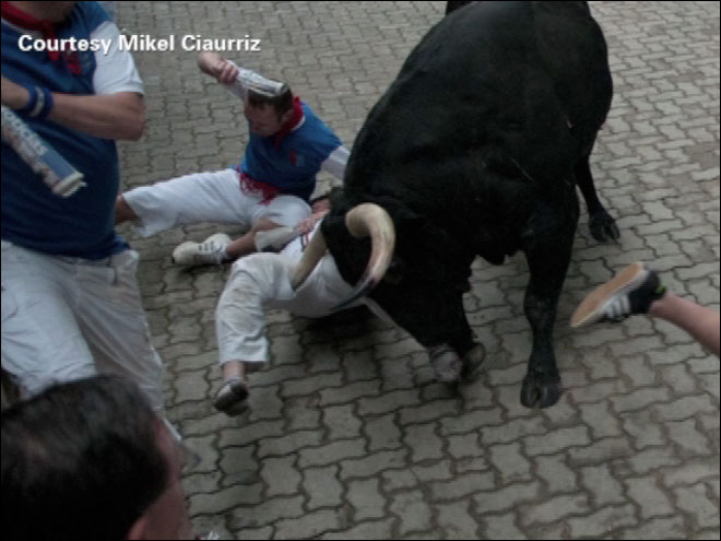 Expert on how to survive the running of the bulls gets gored