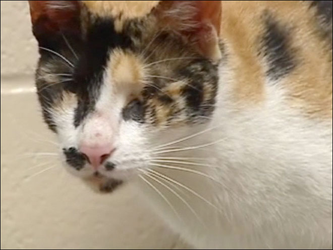 Blind cat that disappeared now back with its family