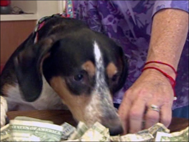 Dog eats $54 in cash