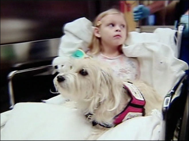 Dog helps doctors monitor child during operation