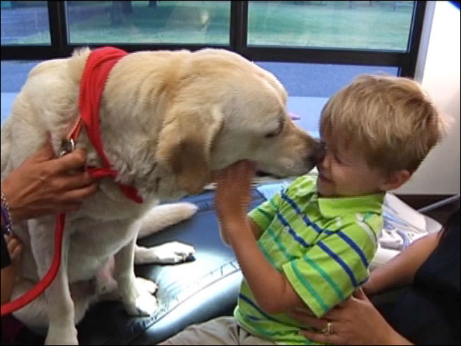 Therapy dogs help nervous dental patients