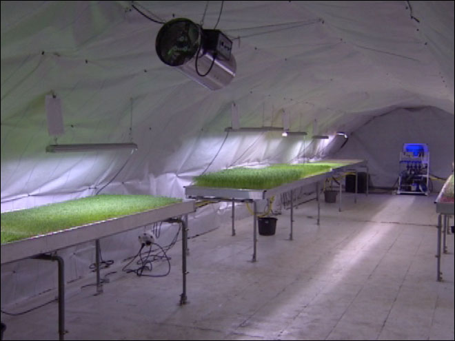 Farms in London's underground tube tunnels