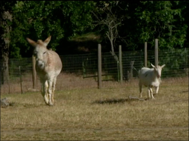 'Best friends' goat and donkey reunited