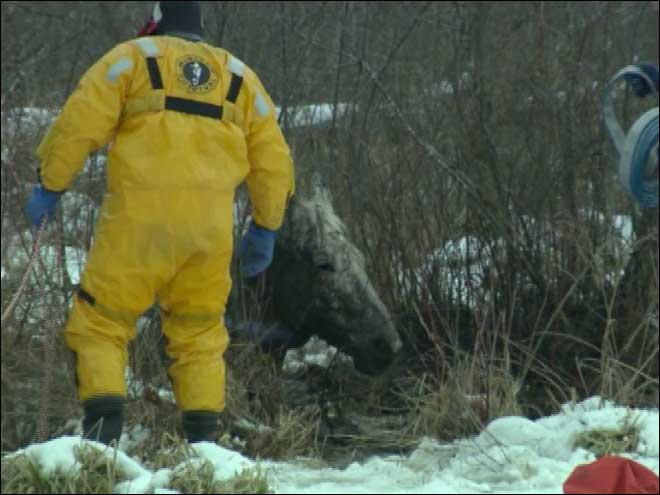 Firefighters rescue horse that fell into icy marsh