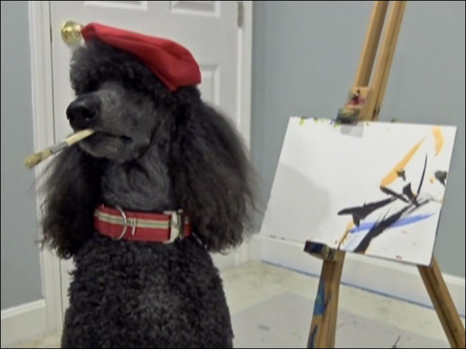 The poodle who paints