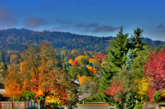 Autumn in Eugene