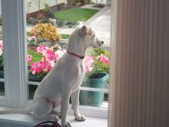 Halt-Who Goes There? Beware or be Chewed