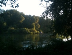 Willamette River in Eugene