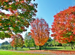 Autumn Color At Lively Park-Thurston