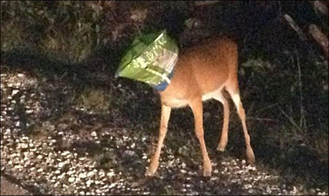 Deer breathing easier after deputy removes Doritos bag