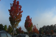 Everett, WA has fall color too!