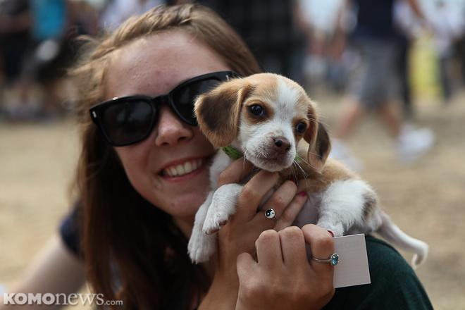 Dogs at Hempfest