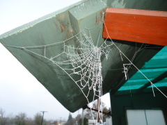 Frozen Spiderweb @ the Bus Stop