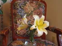 Huge Yellow Lily
