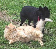 Dog & Cat Wrestle